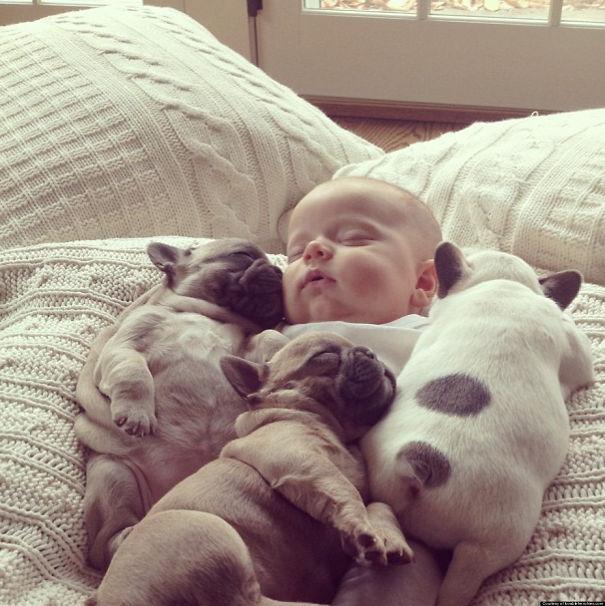 fotos-cachorros-bulldog (14)
