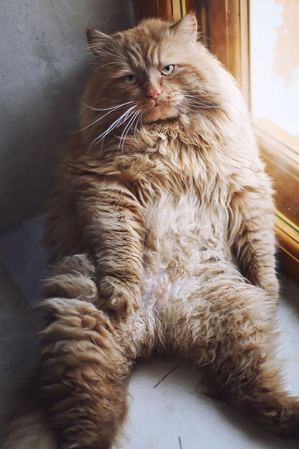 gatos-enormes (7)