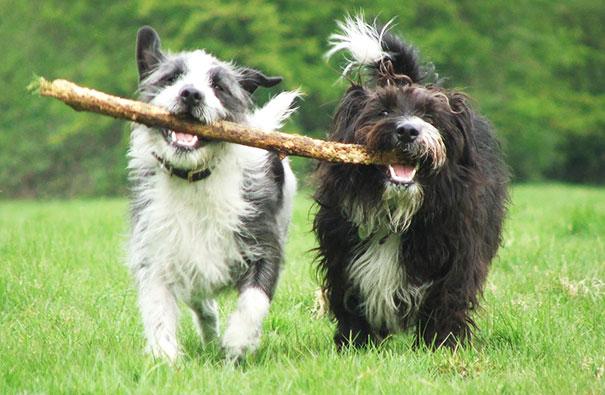 perros-mejores-amigos (20)