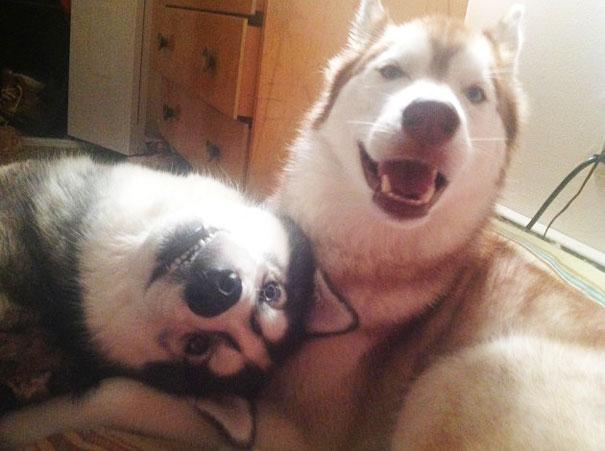 perros-mejores-amigos (4)