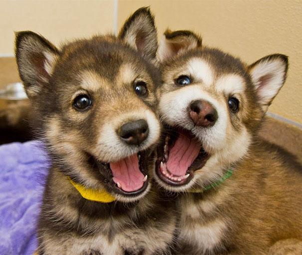 perros-mejores-amigos (8)