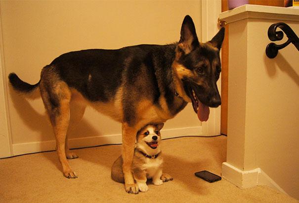 perros-mejores-amigos (9)