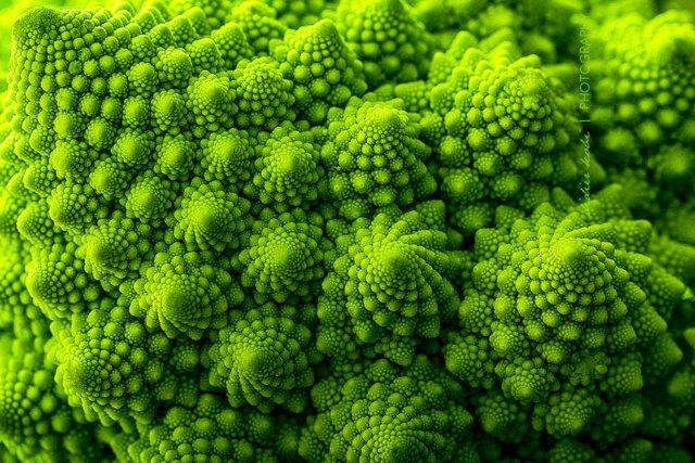 plantas-geometricas (6)