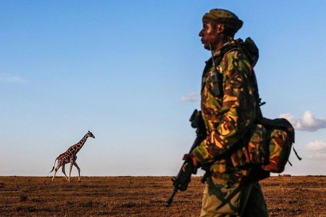 ultimo-rinoceronte-blanco-norte-protegido-kenia (1)
