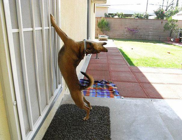 animales-pidiendo-entrar (3)