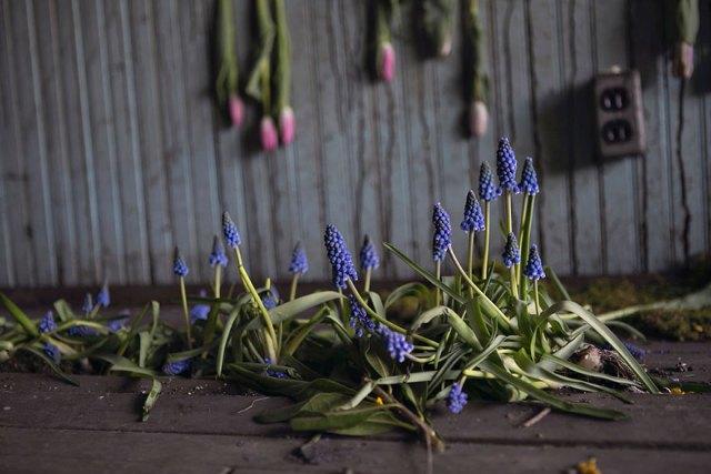 casa-abandonada-jardin-flores-lisa-waud-detroit (8)