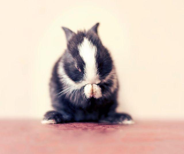 fotos-crias-conejos-creciendo (12)