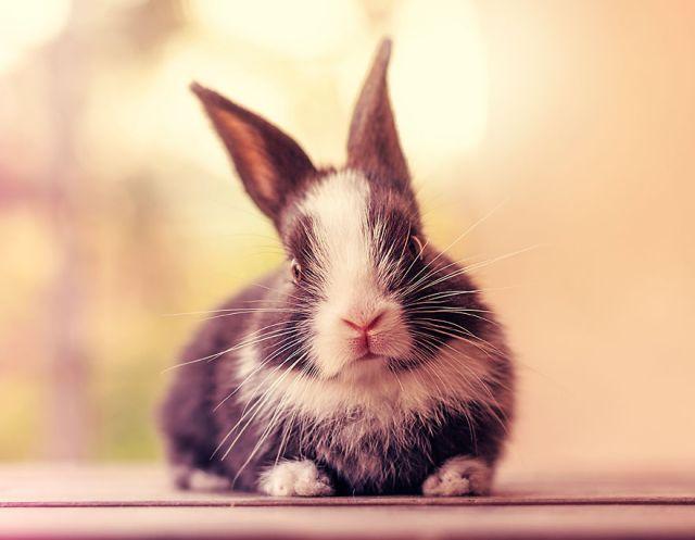 fotos-crias-conejos-creciendo (5)