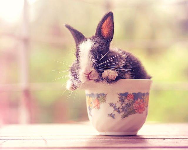 fotos-crias-conejos-creciendo (9)