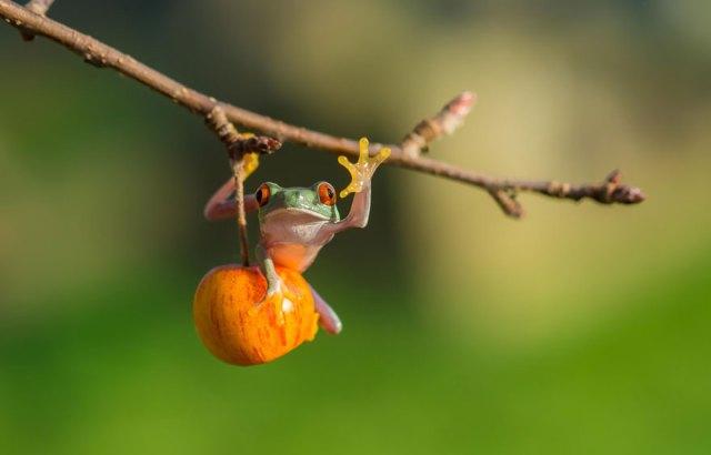 fotos-curiosas-ranas-anfibios (23)
