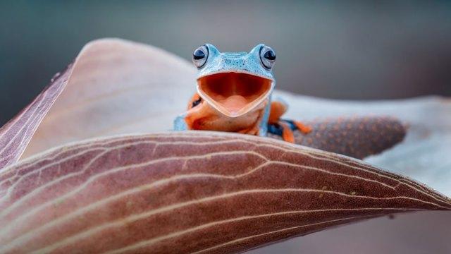 fotos-curiosas-ranas-anfibios (6)