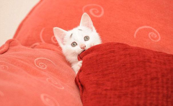 gary-gatito-confuso-cejas-entwistle-manchester (2)