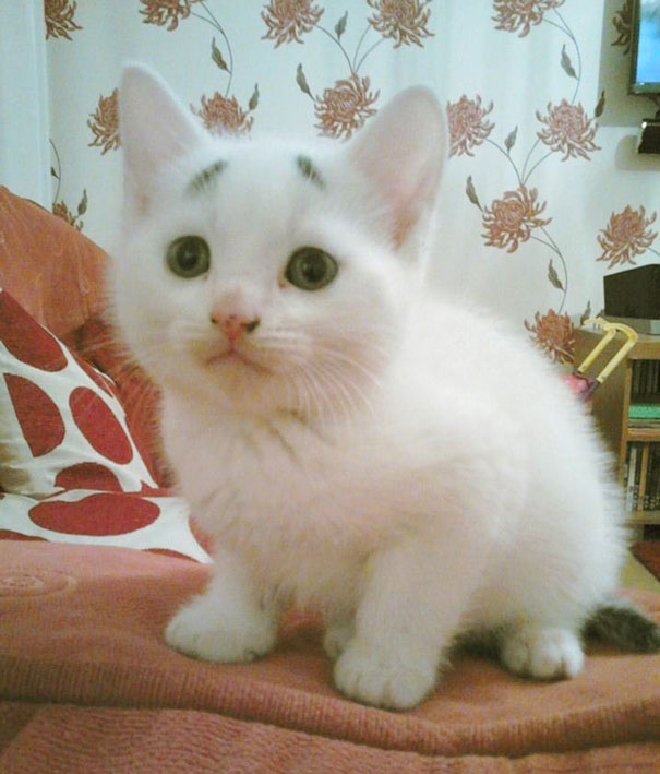 gary-gatito-confuso-cejas-entwistle-manchester (7)