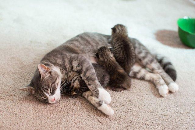 madre-gata-adopta-3-gatitos-huerfanos-mikey-texas (5)