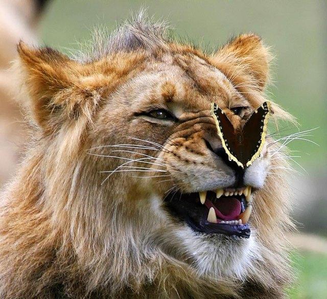 mariposas-con-animales (17)