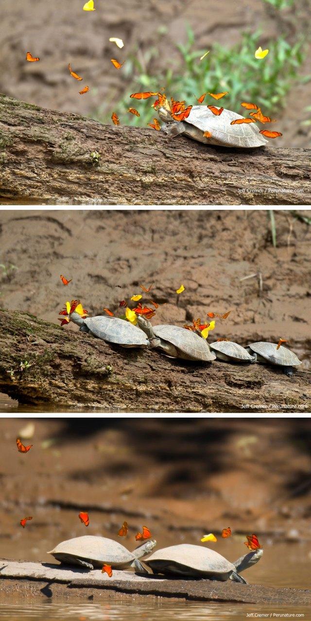 mariposas-con-animales (2)