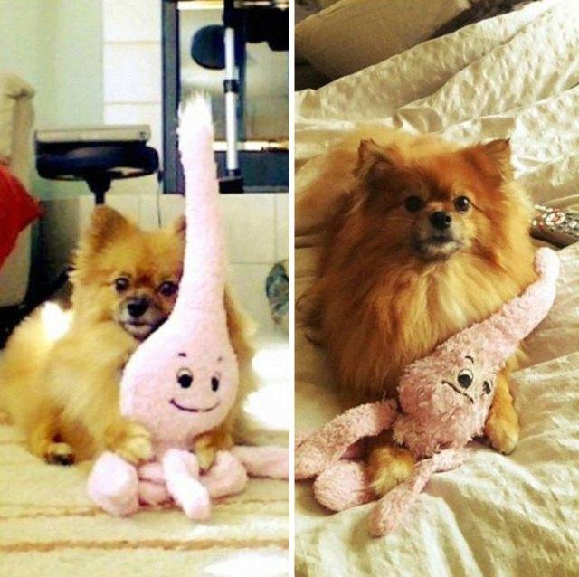 mascotas-creciendo-juguetes (25)