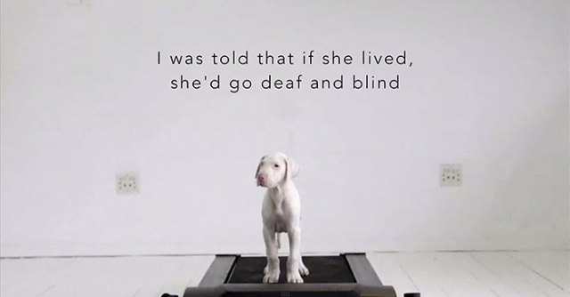 perro-rescatado-pegasus-creciendo-dave-meinert
