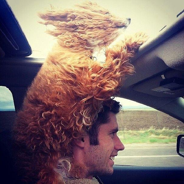 perros-disfrutando-viaje-coche (1)