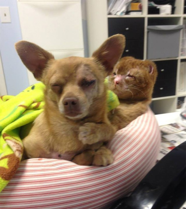 russel-gato-superviviente-cuida-animales-hospital (10)