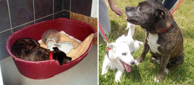 amistad-animal-perros-abandonados-ciego-glenn-guia-buzz (4)