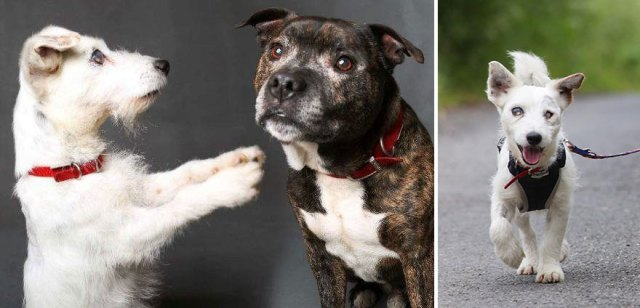 amistad-animal-perros-abandonados-ciego-glenn-guia-buzz (5)