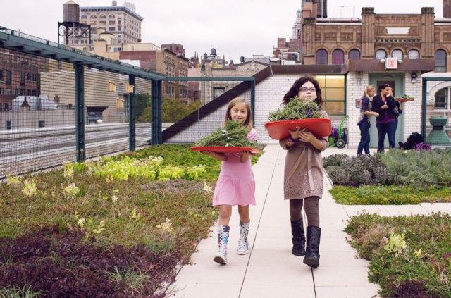 escuelas-publicas-nueva-york-paneles-solares (1)