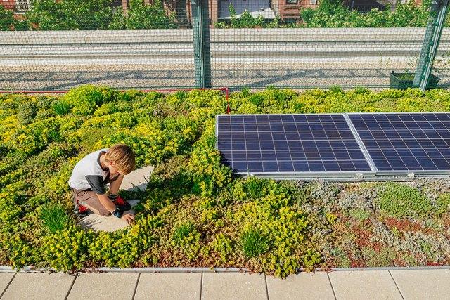 escuelas-publicas-nueva-york-paneles-solares (11)