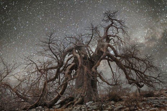 fotos-arboles-viejos-noche-estrellas-beth-moon (11)