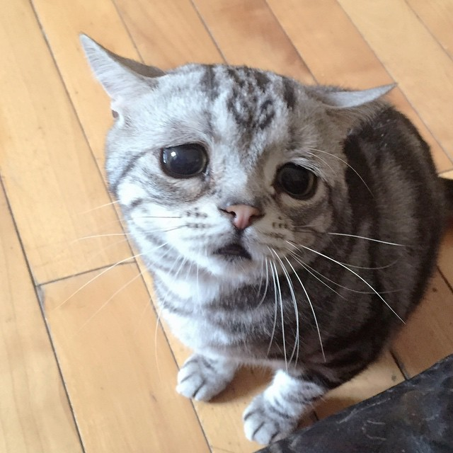 gato-triste-luhu-maggie-liu (5)