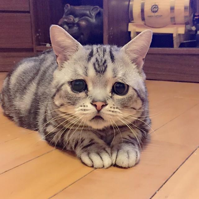 gato-triste-luhu-maggie-liu (7)