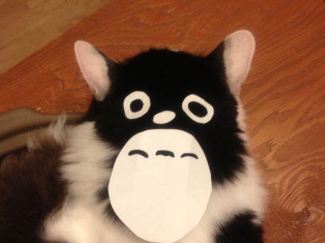 gatos-disfrazados-totoro-duenos-japon (5)