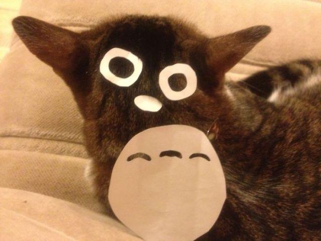 gatos-disfrazados-totoro-duenos-japon (6)