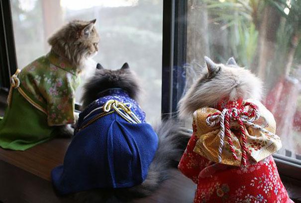 gatos-kimonos-japon (4)