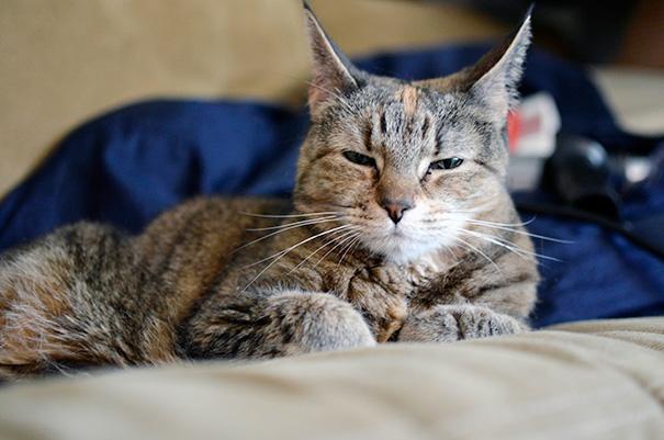 gatos-mayores-adoptados (11)