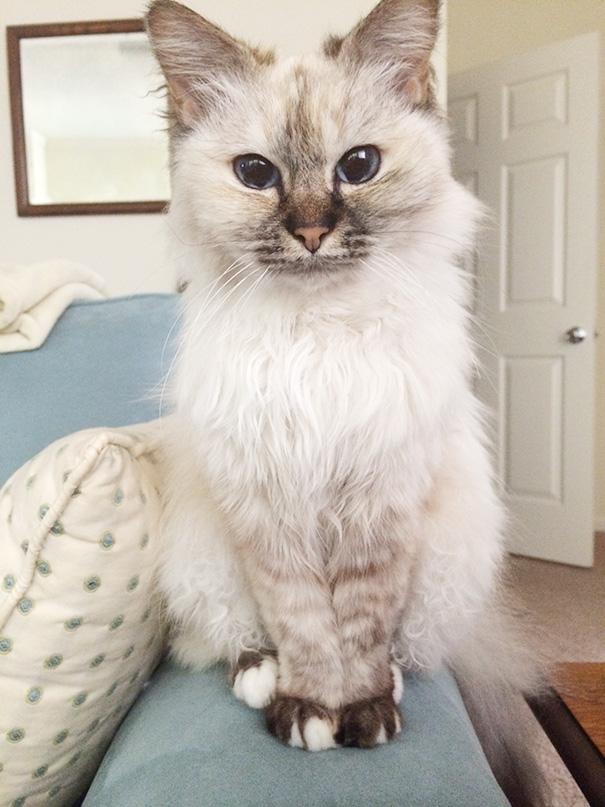 gatos-mayores-adoptados (14)
