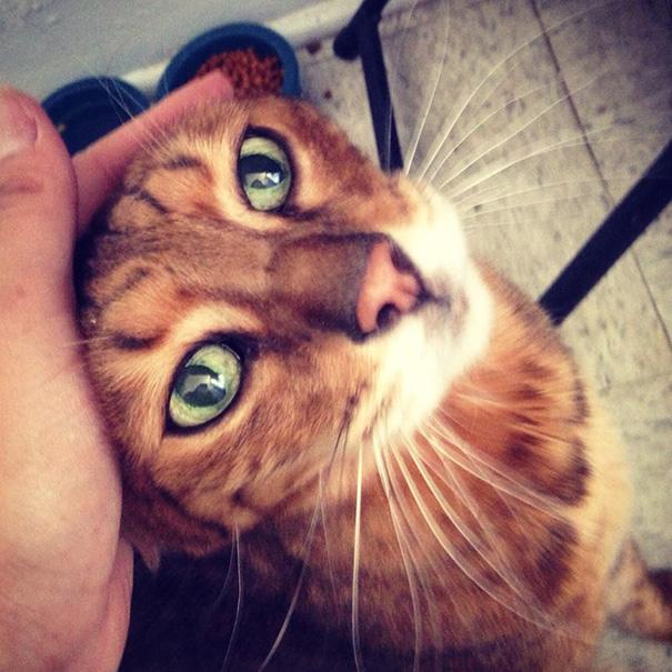 gatos-mayores-adoptados (25)