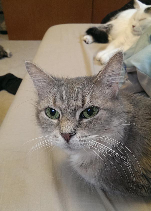 gatos-mayores-adoptados (28)