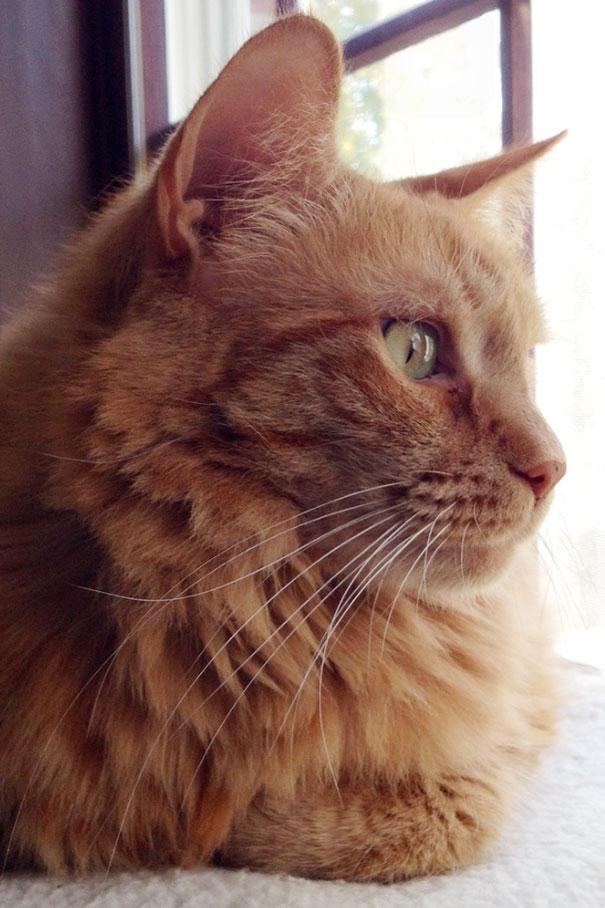 gatos-mayores-adoptados (32)