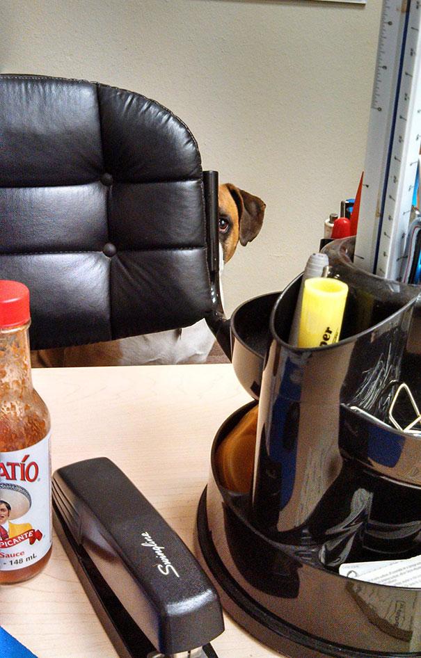 lleva-tu-perro-al-trabajo (13)
