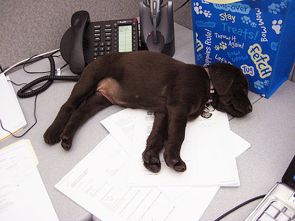 lleva-tu-perro-al-trabajo (2)