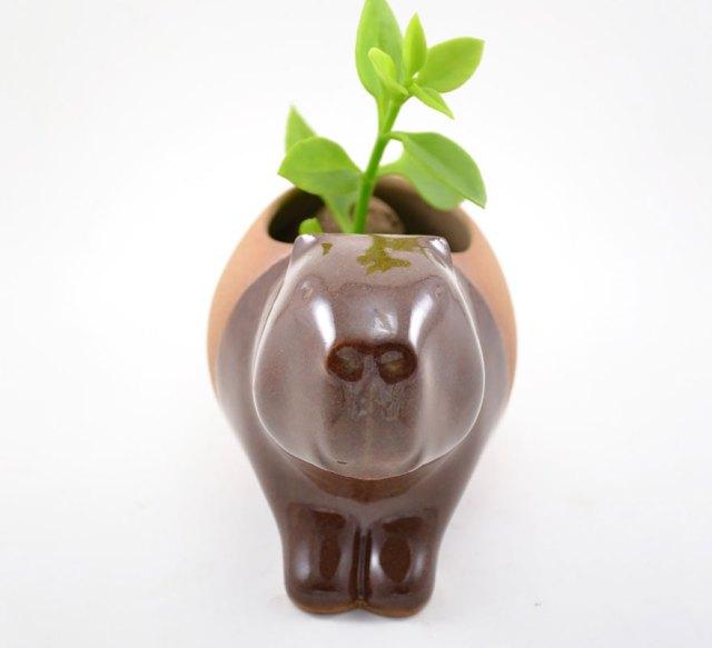 macetas-animales-ceramica-plantas-suculentas-priscilla-ramos (4)