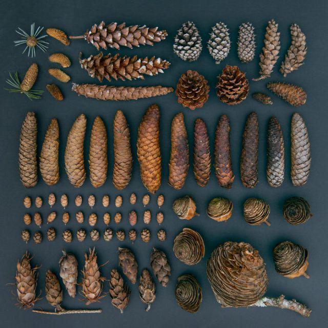 objetos-cotidianos-ordenados-emily-blincoe (11)
