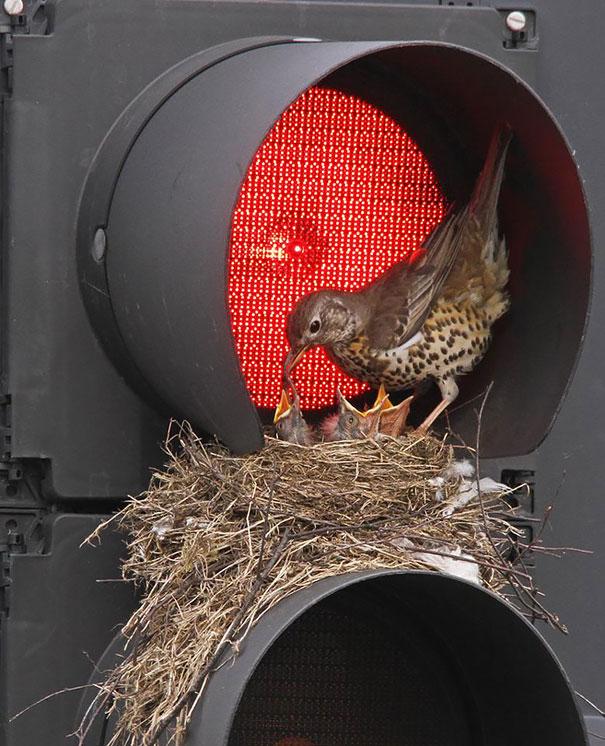 pajaros-nidos-sitios-inusuales (11)