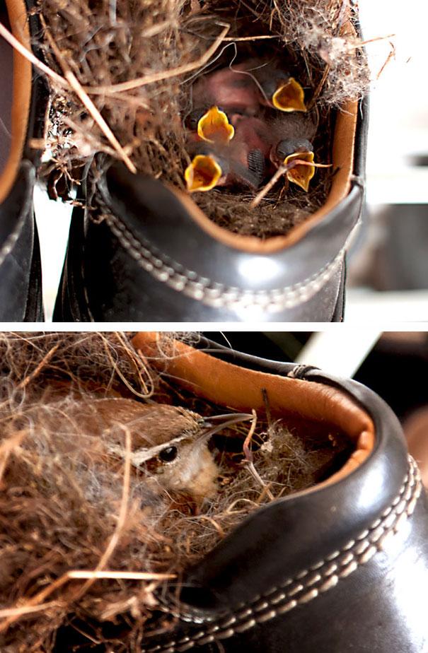 pajaros-nidos-sitios-inusuales (16)
