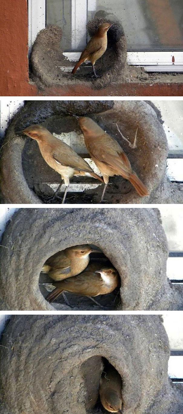 pajaros-nidos-sitios-inusuales (29)