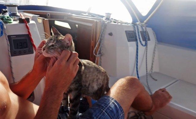 pareja-viajes-mundo-barco-gato-matt-jessica-johnson (20)
