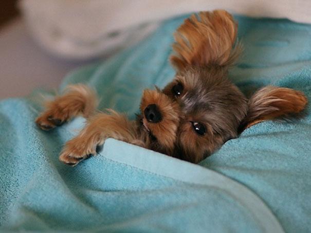 perros-durmiendo-camas-duenos (18)