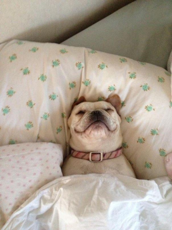 perros-durmiendo-camas-duenos (8)