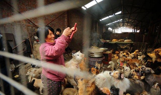 perros-rescatados-festival-yulin-china (13)